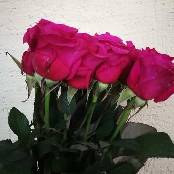 "Роза французская ""Мамми Блю"" 50-70 см"