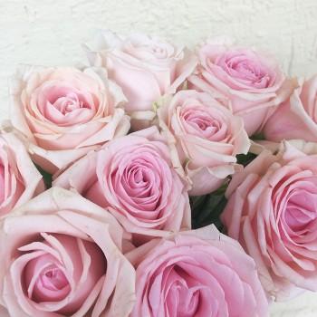 """Роза """"Lazise"""" 50-60 см (Импорт)"""