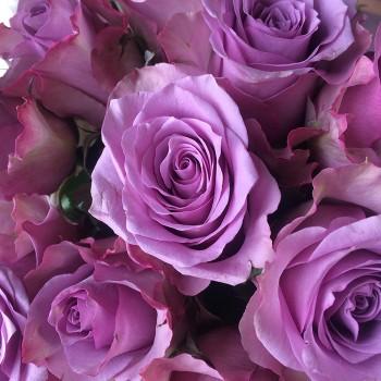 """Роза """"Nightingale"""" 50-60 см (Импорт)"""