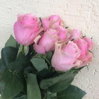 """Роза """"Celeb"""" 50-60 см (Импорт)"""