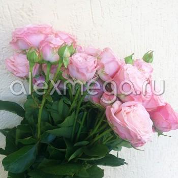 Роза кустовая Бомбастик (Bombastik)