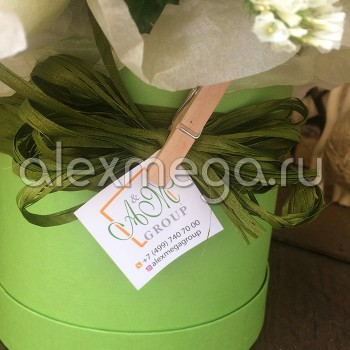Композиция с розой Элит и оливой в шляпной коробке