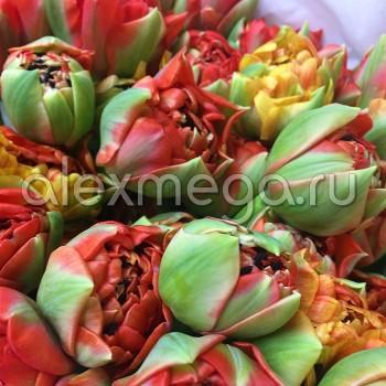 Тюльпаны Gudosnik double (ЕС, Россия) в упаковке 15 шт. Цена за 1 упаковку