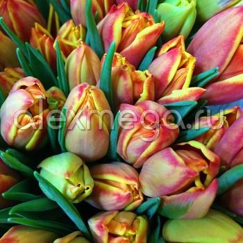 Тюльпаны (ЕС, Россия) в упаковке 15 шт. Цена за 1 упаковку.