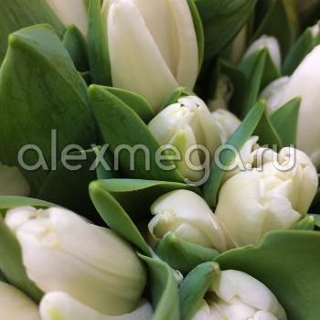 Тюльпаны (ЕС, Россия) в упаковке 15 шт. Цена за 1 упаковку