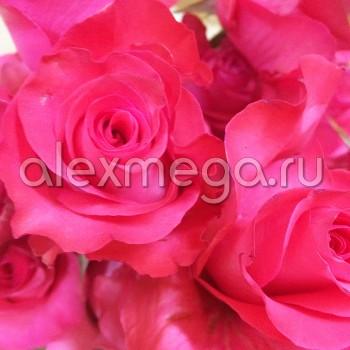 """Роза """"Hot Lady"""" 50-60 см (Импорт)"""