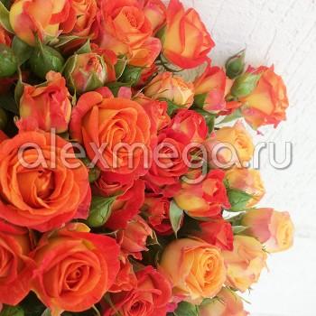 Роза кустовая Фиеста (Fiesta) МИНИ
