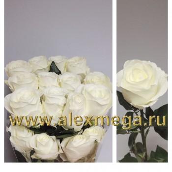 Роза импортная ТИТАНИК (Titanic) 70-90 см. 15 шт.