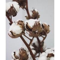 Хотите добавить вашему букетику изюминку ? У нас всегда в наличии различные сухоцветы 🌸 . Мы ждём вас в @alexmegagroup ежедневно с 9 до 21 ❤️ . . ——————— AlexMegaGroup AMG#alexmegagroup#alexmega#amg#цветочки#цветы#flowers#цветыназаказ#доставкабукетов#цветывкоробке#101роза#букет#свадьба#цветынасвадьбу#свадебноеоформление#букетневесты#флористика#подарок#магазинцветочки#сходненская#фабрициуса40#тушинская#циолковского7#митино#пятницкоешоссе42#магазинцветочки#шляпныекоробки#ящички#ящикисцветами#цветочки#флорист#флористика#букет
