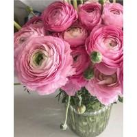 Итальянские лютики #ранункулюсы  непременно украсят Ваш дом и душу! Сегодня в наличии и под заказ в любое время! Спасибо что делитесь с нами фотографиями ❤️ ——————— AlexMegaGroup AMG#alexmegagroup#alexmega#amg#цветочки#цветы#flowers#цветыназаказ#доставкабукетов#цветывкоробке#101роза#букет#свадьба#цветынасвадьбу#свадебноеоформление#букетневесты#флористика#подарок#магазинцветочки#сходненская#фабрициуса40#тушинсfкая#циолковского7#митино#пятницкоешоссе42#магазинцветочки#шляпныекоробки#ящички#ящикисцветами#цветочки
