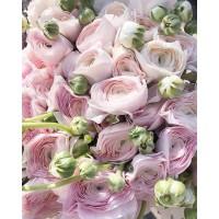 Информация для мужчин!  Скажем по секрету:сегодня в Direct поступило очень много отзывов-восхищений от прекрасных дам на эти прекрасные цветы!😊 Поэтому,намекаем! Как сделать счастливой свою любимую❤️А именно,запомнить название этого чудесного цветка (РАНУНКУЛЮС) и заказать для неё букет! И лучше сделать это побыстрее-количество ограничено!😉 ——————— AlexMegaGroup AMG#alexmegagroup#alexmega#amg#цветочки#цветы#flowers#цветыназаказ#доставкабукетов#цветывкоробке#101роза#букет#свадьба#цветынасвадьбу#свадебноеоформление#букетневесты#флористика#подарок#магазинцветочки#сходненская#фабрициуса40#тушинсfкая#циолковского7#митино#пятницкоешоссе42#магазинцветочки#шляпныекоробки#ящички#ящикисцветами#цветочки