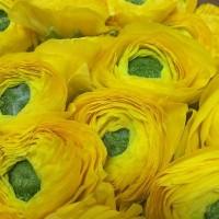 Ранункулюс-является символом шарма и привлекательности,независимо от цвета.Самое популярное значение для Ранункулюса-это восхищение. AlexMegaGroup AMG#alexmegagroup#alexmega#amg#цветочки#цветы#flowers#цветыназаказ#доставкабукетов#цветывкоробке#101роза#букет#свадьба#цветынасвадьбу#свадебноеоформление#букетневесты#флористика#подарок#магазинцветочки#сходненская#фабрициуса40#тушинсfкая#циолковского7#митино#пятницкоешоссе42#магазинцветочки#шляпныекоробки#ящички#ящикисцветами#цветочки
